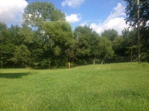 backyard beauty